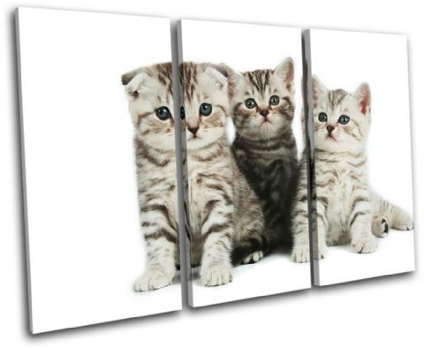 Kittens Cats Pets Animals - 13-1042(00B)-TR32-LO
